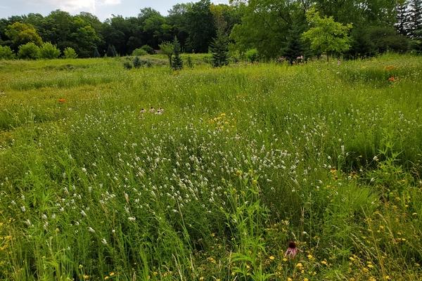 prairie grasslands 1