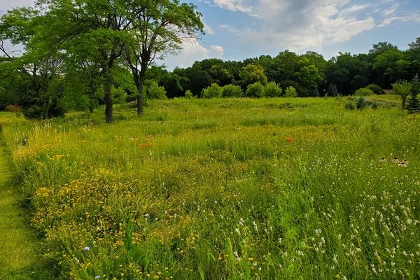 prairie grasslands 2