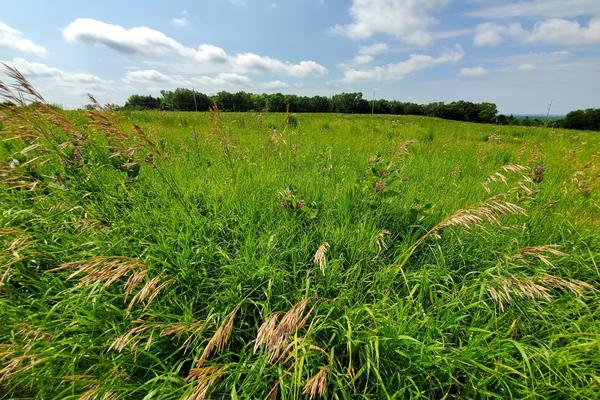 prairie grasslands 5