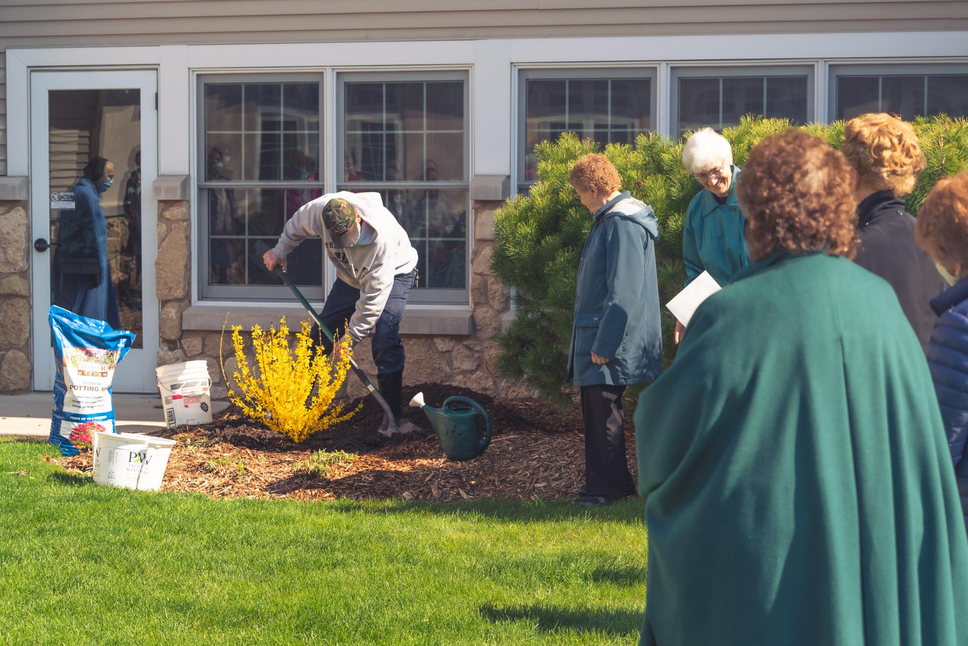 Planting shrub